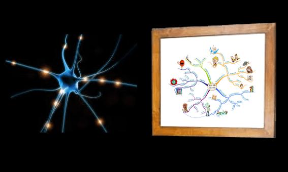 radientStructure mirrors brain